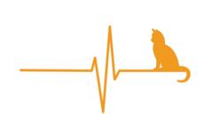 Epilepsie-Katzen.de