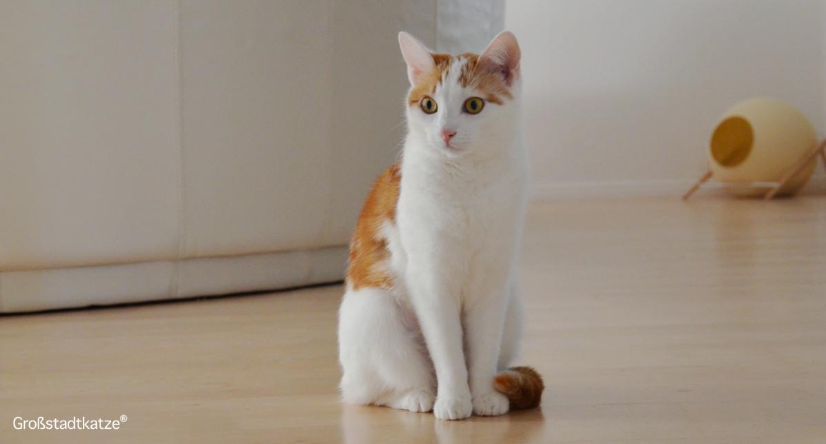 Epilepsie bei der Katze: Was bedeutet das?