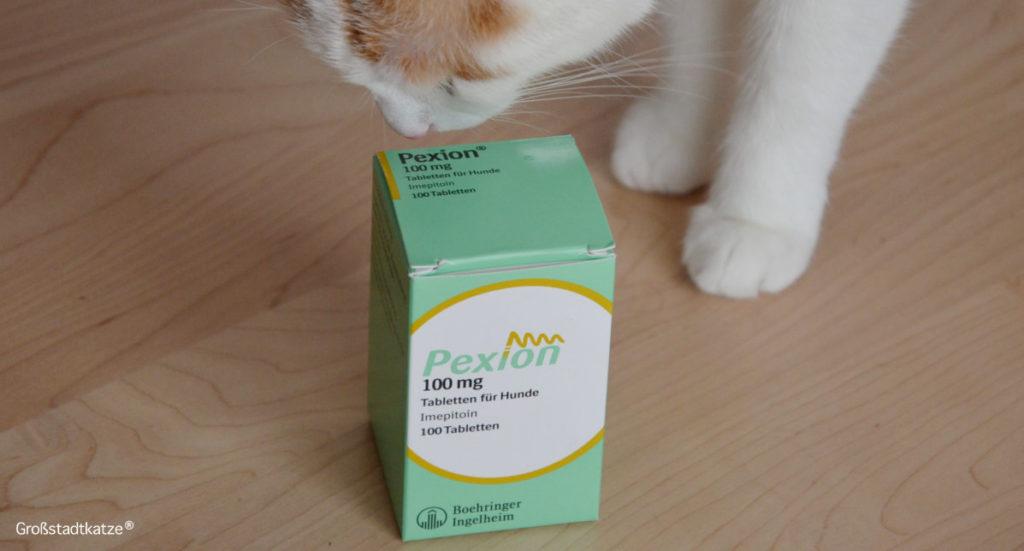 Antiepileptika Pexion 100 mg | Epilepsie Katze | Medikament Pexion 100 mg